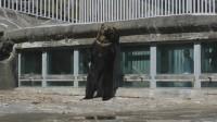 背こすり行動をするオスのクマ
