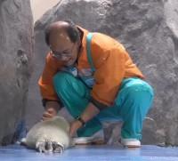 バイカルアザラシの世話もしている石原さん