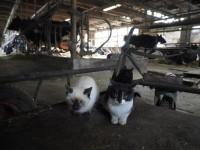 『劇場版 岩合光昭の世界ネコ歩き あるがままに、水と大地のネコ家族 』