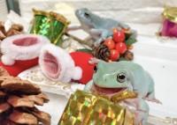 笑顔満開!?クリスマスプレゼントを喜ぶカエル