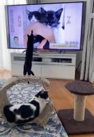 自身の『徹子の部屋』デビューを眺めるマルオレちゃん(画像提供:藤あや子さんTwitterより)