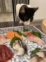 お刺身に興味津々オレオちゃん(画像提供:藤あや子さんTwitterより)