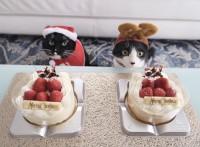 クリスマスケーキとともに(画像提供:藤あや子さんTwitterより)