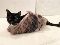 巾着になったマルくん(画像提供:藤あや子さんTwitterより)