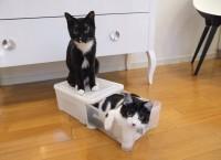 箱入り娘と箱の上の息子(画像提供:藤あや子さん)
