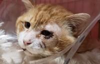 治療を受け、虎吉と名付けられたこの猫が…!