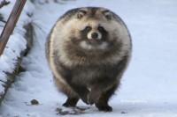 冬毛モフモフに、抱きしめたくなる人多数