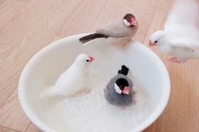 水浴びタイム