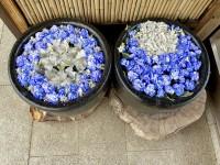 東京オリンピックを表現した花手水