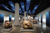 アンモナイト展示数、日本一として有名な三笠市立博物館