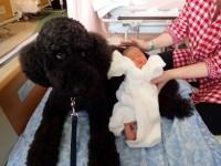 ミカを撫でた翌日に産まれました。お母さまから報告が!