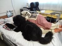 患者さんが辛くて起きられない日はベッドの上で寄り添うミカ