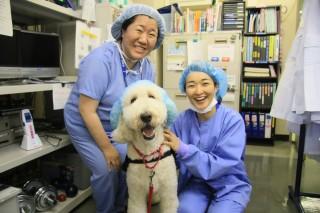 手術室のスタッフにも元気を与えるモリス 画像提供:聖マリアンナ医科大学病院
