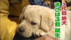 3代目旅犬・まさはる君(特典映像より)
