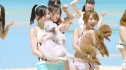 MVでは犬と戯れるシーンも
