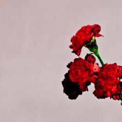 アルバム『ラブ・イン・ザ・フューチャー』(2013年9月4日発売)