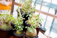 """次のインテリアグリーンはコレ 摩訶不思議な""""塊根植物""""【男のコレクション】"""