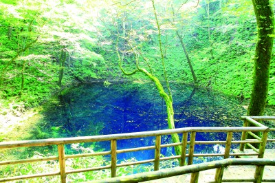 『白神山地』の青池