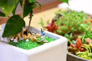 ジオラマ×観葉植物 作品テーマ:ゴルフ