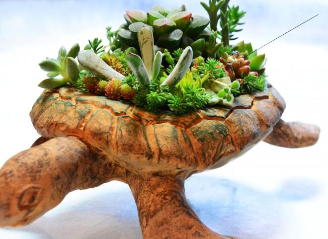 ジオラマ×観葉植物 作品名:「うっかり多肉島」 作者:福井崇史