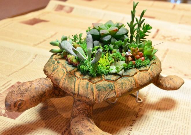 作品「うっかり多肉島」が完成。だけど植物は成長し、変化し続ける。それが魅力