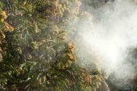 【Trend Research】シーズン到来、すぐに試したい花粉症対策