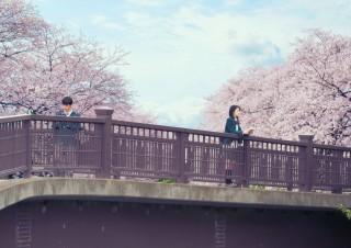原作の装丁そのまま。桜の木のもとに佇む桜良(浜辺美波)と【僕】(DISH//・北村匠海)の劇中カット(C)2017「君の膵臓をたべたい」製作委員会