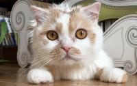 フォロワー24万・愛猫「ホイちゃん」の日常が人気、飼い主に聞くペットを発信するコツ
