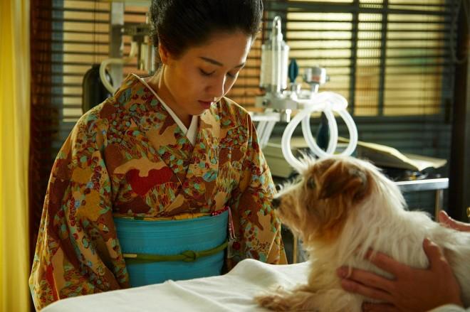動物への愛情が深いキャスト&スタッフが集結したという『僕とシッポと神楽坂』(C)テレビ朝日