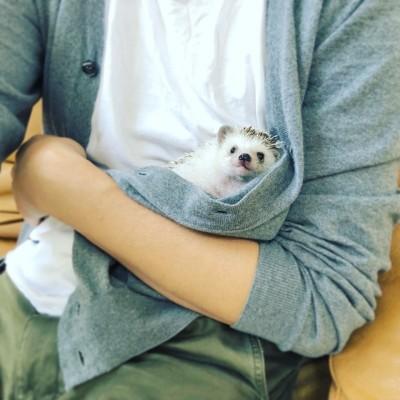 インスタグラム「Azuki the hedgehog」(@hedgehog_azuki)より