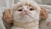 "SNSの人気猫「ホイちゃん」も単独展を開催、主催者に聞く""猫イベント""の成功法則"