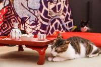 """保護猫が主役、異色の江戸版""""猫カフェ""""が好調「少しでも関心持ってもらえれば」"""