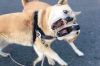 "SNSざわつく""じゃれ愛""話題、2匹の保護犬飼い主「投稿見て幸せに暮らす犬増えれば」"