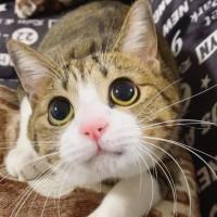 日本一の猫アカウント「すずめ」と「うなぎ」、飼い主明かす愛猫の一瞬のかわいさを写すワザ