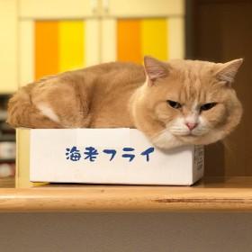 """短足猫家族「まいる」がSNSで人気、""""携帯音痴""""乗り越え「猫いる生活」を発信"""
