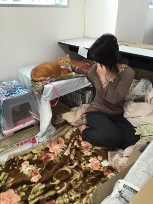 同伴避難所の飼い主と猫