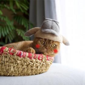ピカチュウにトランプ大統領、猫の抜け毛で作ったパロ帽子に反響「抜け毛貯金してます」