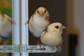 """「なんて言う落ちゲー?」十姉妹の""""遊び""""に反響 鳥10羽と暮らす幸せ"""