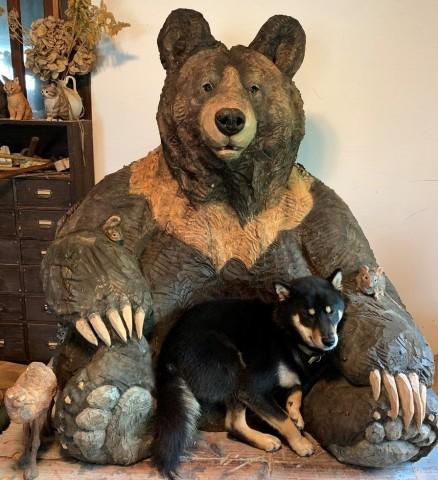 大きな木彫りのクマの懐で眠る、黒柴の月くん(画像提供:はしもとみおさん)