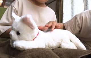 妊娠している猫のぬいぐるみ「ねこ、産んじゃった!」画像提供:セガトイズ