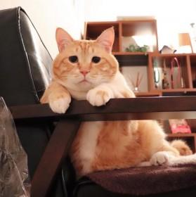 """愛され""""寅次郎""""にロス癒す""""ぐっぴー""""、「毎日呼びたい」人気猫の名づけ方"""
