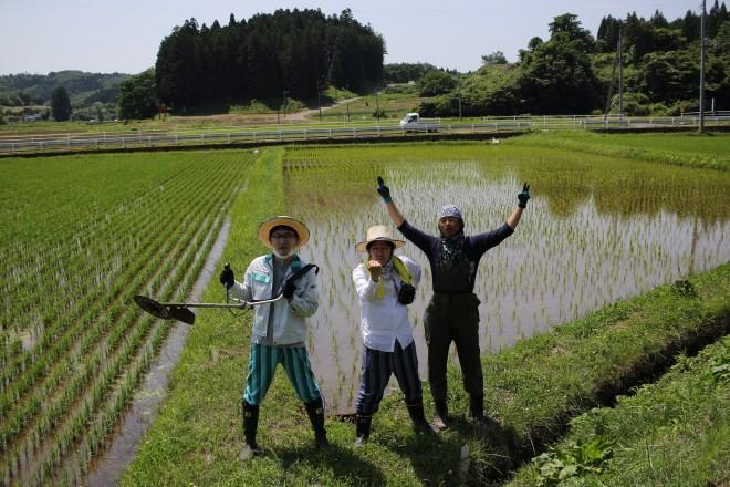 農業活性化支援員として仙台市太白区坪沼地区に農地を借り受けお米を生産。写真:本人提供