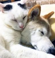 """認知症の""""おばあちゃん犬""""を介護する猫…種を超えた愛に「癒される」「感動した」と反響"""