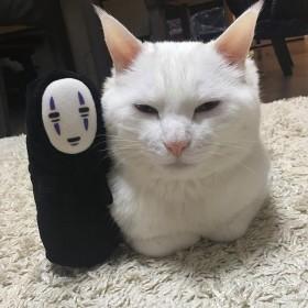 """『千と千尋』のハク様? 神々しい表情がハマる""""白猫""""の日常とは"""