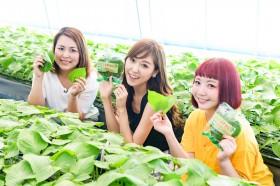 """K-FOOD(韓国食品)生産地訪問!韓国旅で見つけた人気韓国食品で""""美容探求"""""""