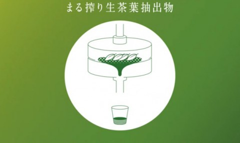 「生茶」の根幹となる素材『まる搾り生茶葉抽出物』