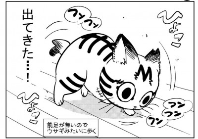 「3本足のしじみちゃん」(ホーム社/集英社)