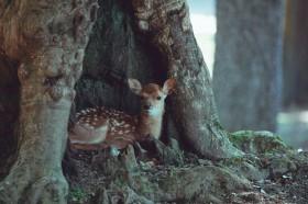 「おとぎ話…?」奈良公園の子鹿写真に反響、移住カメラマン語る鹿への10年愛