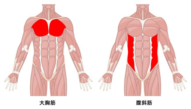 大胸筋と腹斜筋