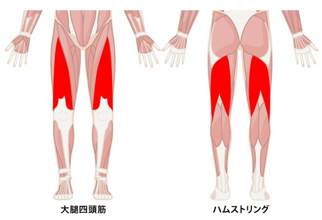 大腿四頭筋とハムストリング